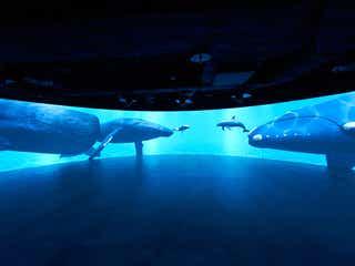 「カワスイ 川崎水族館」世界の水辺環境を再現&生きもの約230種展示