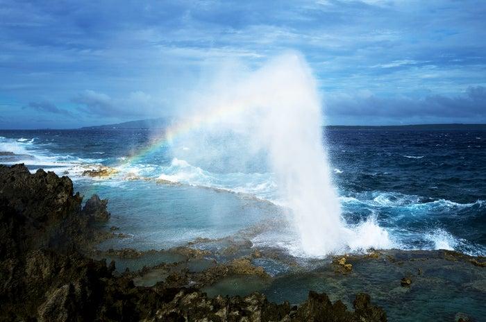 10メートル近くまで達する潮吹きは迫力満点!ブロー・ホール(C)Junji Takasago/MVA