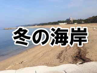 【正月に】真冬の砂浜に打ち上げられてたもの調べてきた
