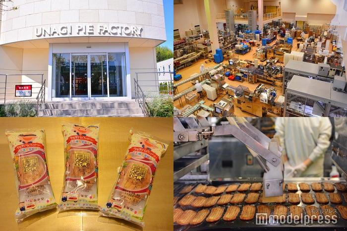 1日約20万本ものうなぎパイを製造する「うなぎパイファクトリー」(C)モデルプレス